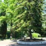 санаторий Алуштинский, территория